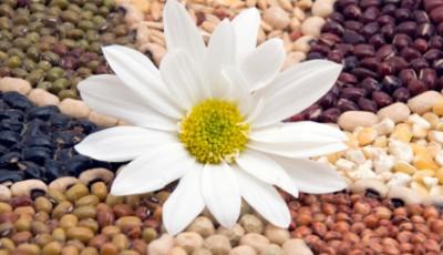 Flower in Beans