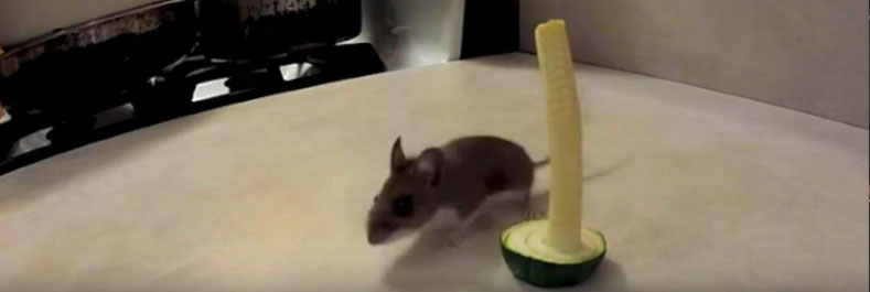 Resources: Mouse vs. Zucchini