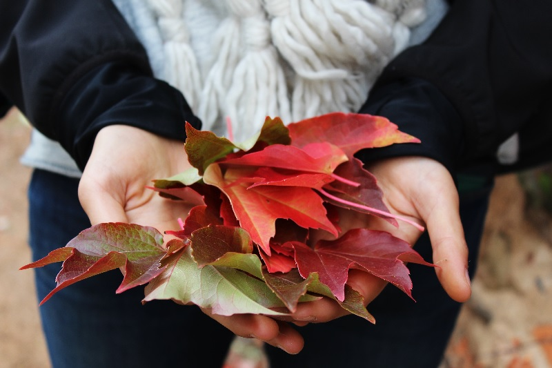 woman holding fall leaves in her hands