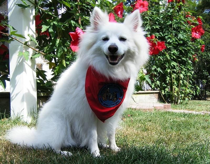 Kodiak, the therapy dog